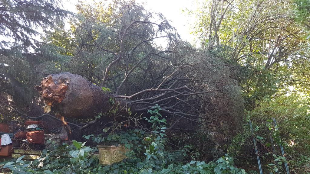 Agronomo Milano valutazione stabilità alberi VTA